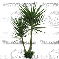 Yucca Tree Texture