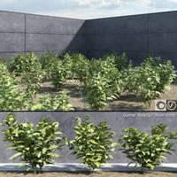 3d model ready japanese laurel plants