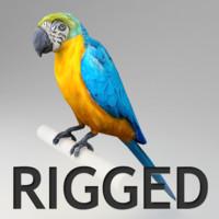rigged ara parrot 3d model