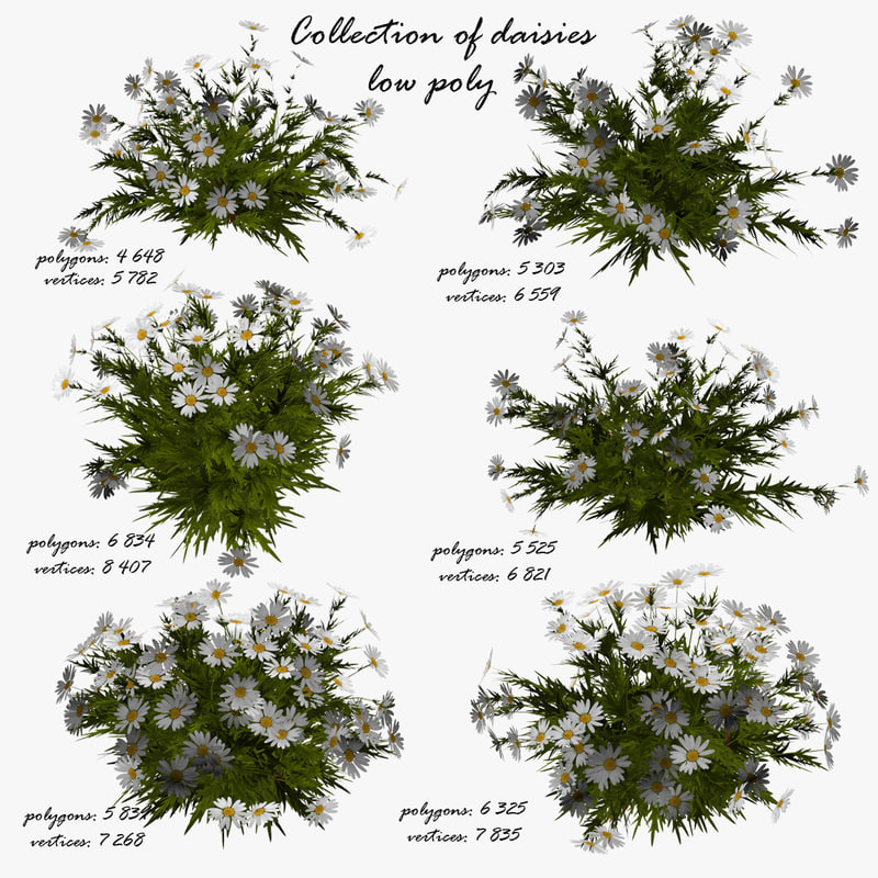 3d model flowers chamomile