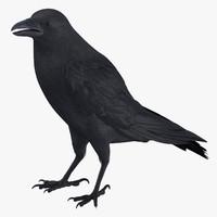 crow 01 3d model