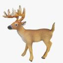 Musk Deer 3D models