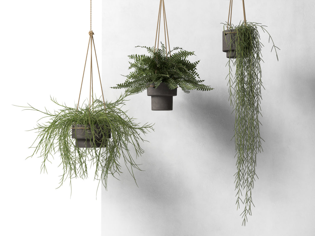 3d model hanging pots plants