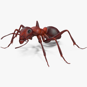 3d model of ant rigged