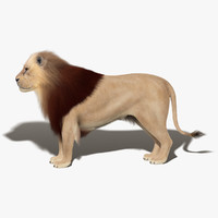 3d lion fur animation 2