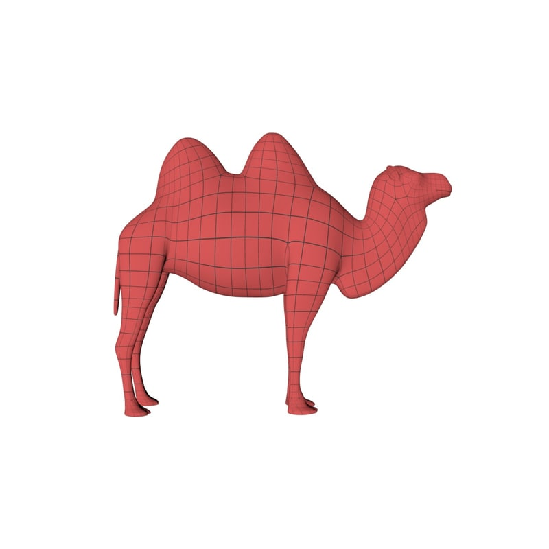 base mesh camel c4d