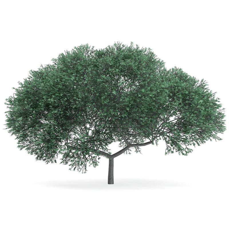 english oak quercus robur 3d max