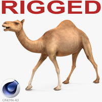 3d model camel rigged