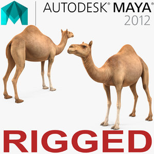 camel rigged 3d ma
