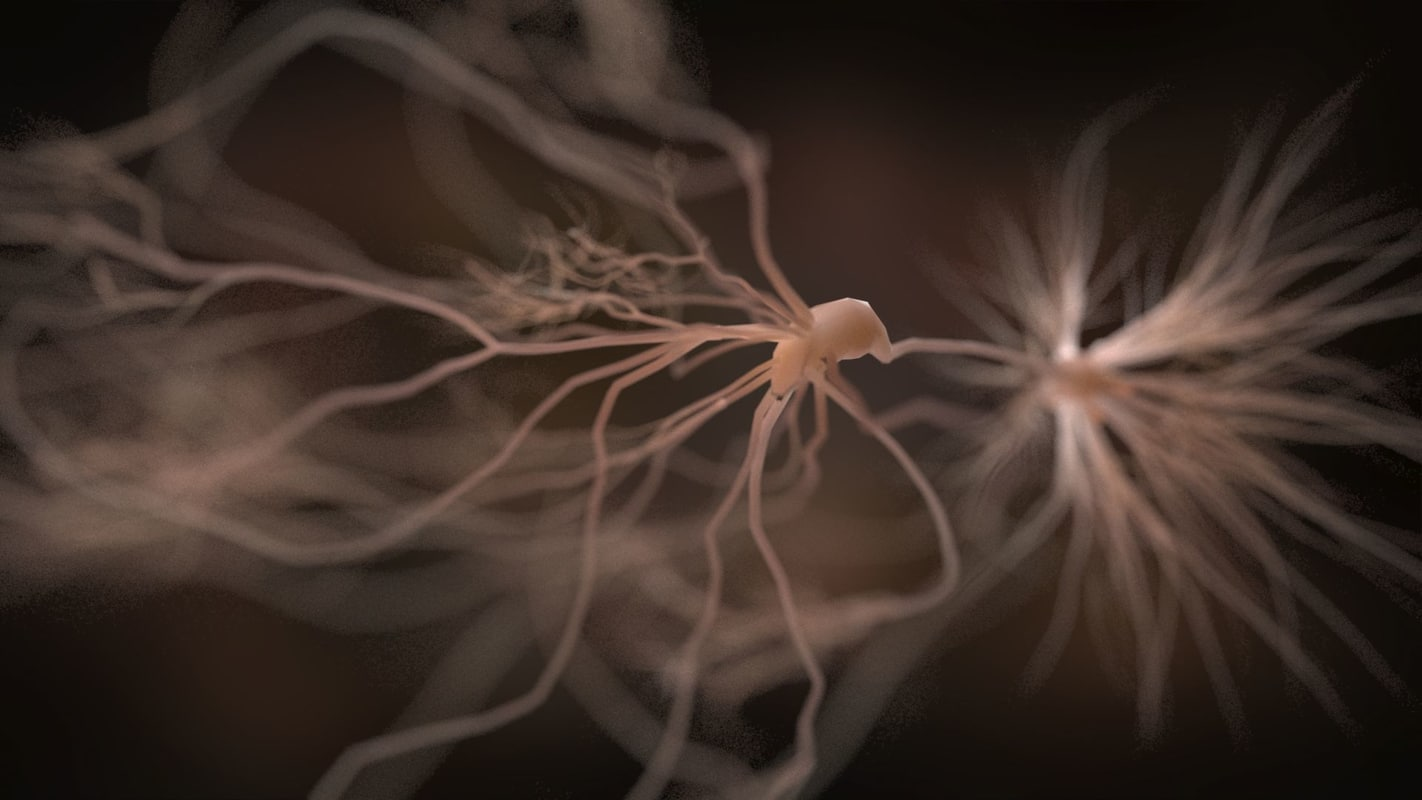 neurons human body 3d max