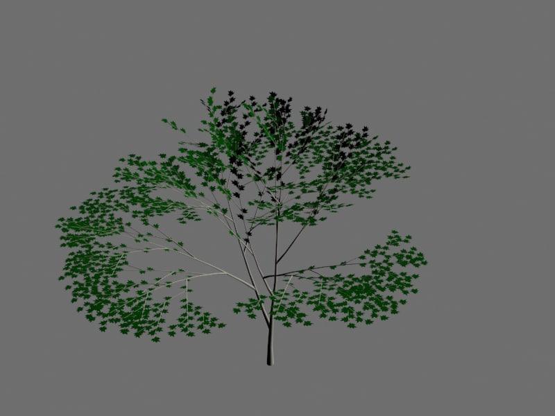 birch tree 3d max