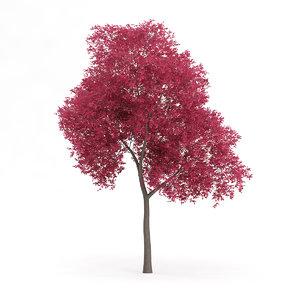 palmate maple acer palmatum 3d model