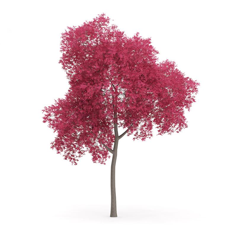 3d model palmate maple acer palmatum