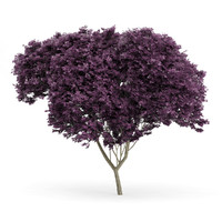eastern redbud cercis canadensis c4d