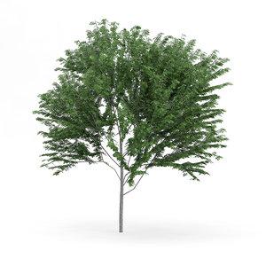 common ash fraxinus excelsior 3d model