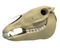 donkey skull skeleton 3ds