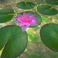 free obj mode water lily flower