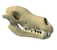3d wolf skull model