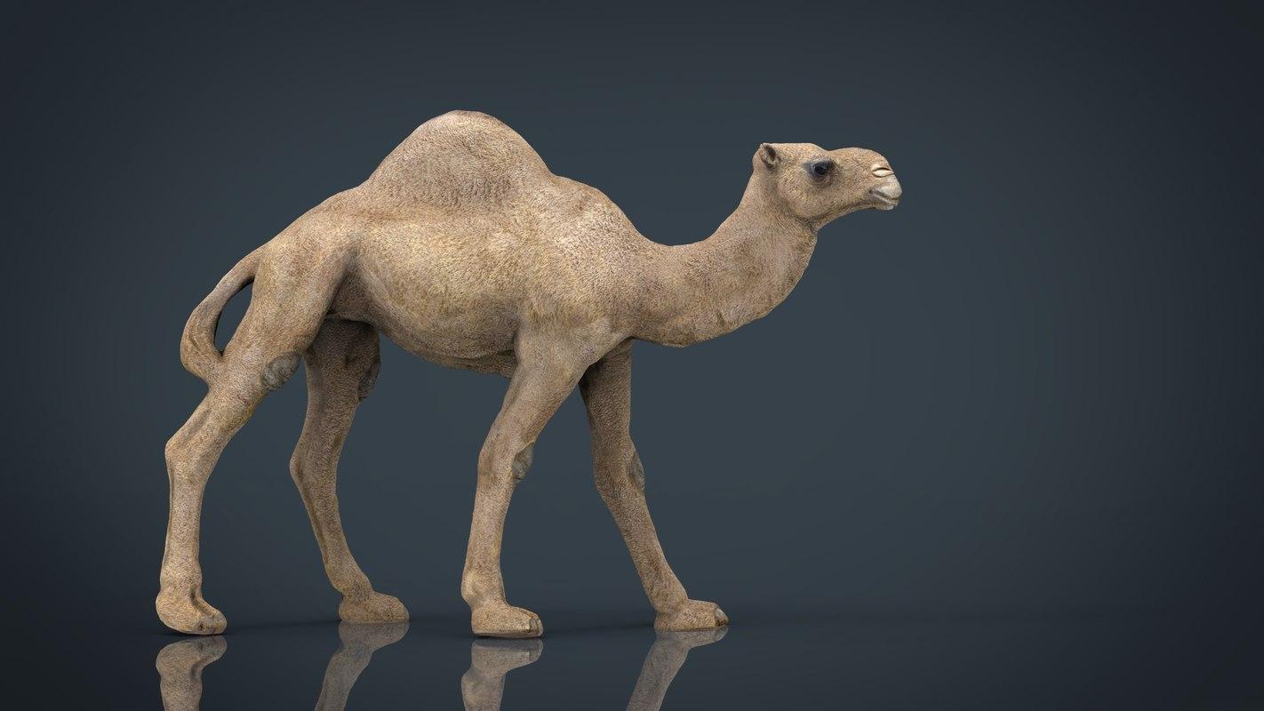 camel stl 3d max