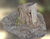 Woden stump