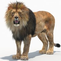 3d model lion 2 rigged fur
