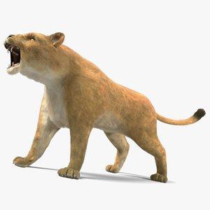 3d lioness fur animation lion