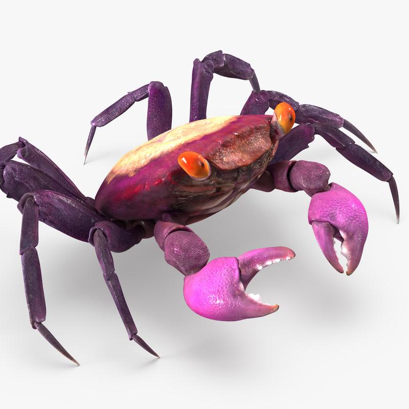 3d vampire crab geosesarma rigged model