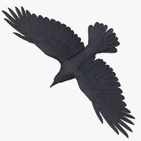 crow 03 3d max