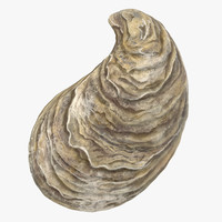 3d oyster shell 01