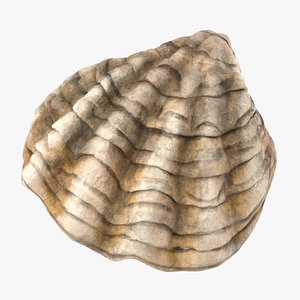 3d model of oyster shell 02