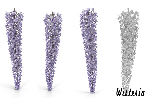 3d wisteria flowers model