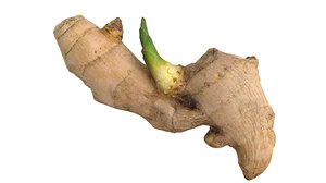 sprouted ginger 3d 3ds