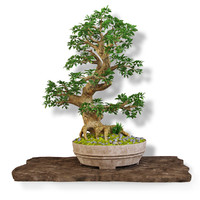 3d bonsai model