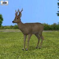 3d model roe deer