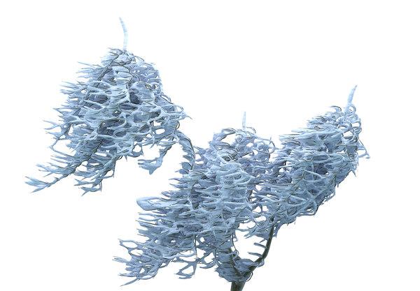 frozen tree hd max