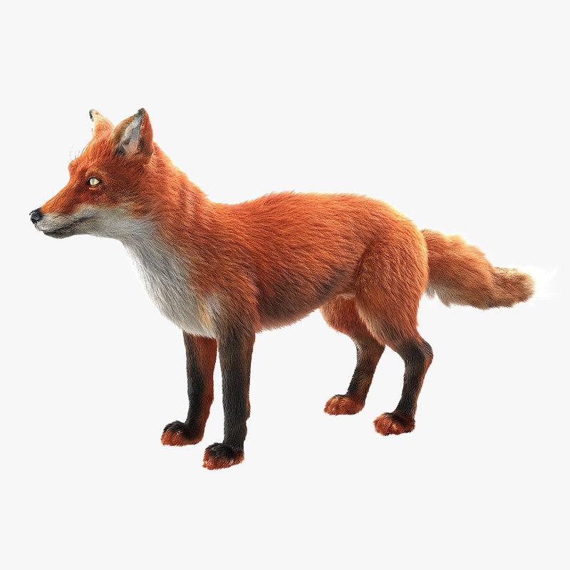 fox ornatrix zbrush 3d model