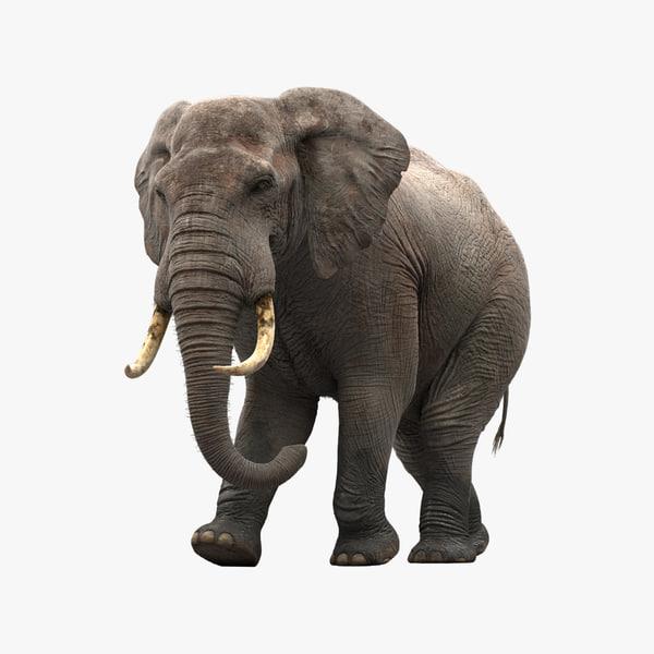 3d model elephant rigging animation