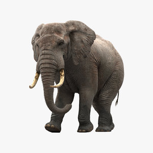 3d model elephant rigging animation