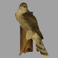 obj sparrow hawks