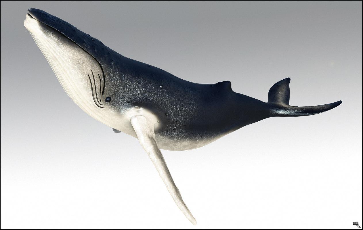 3d max humpback whale
