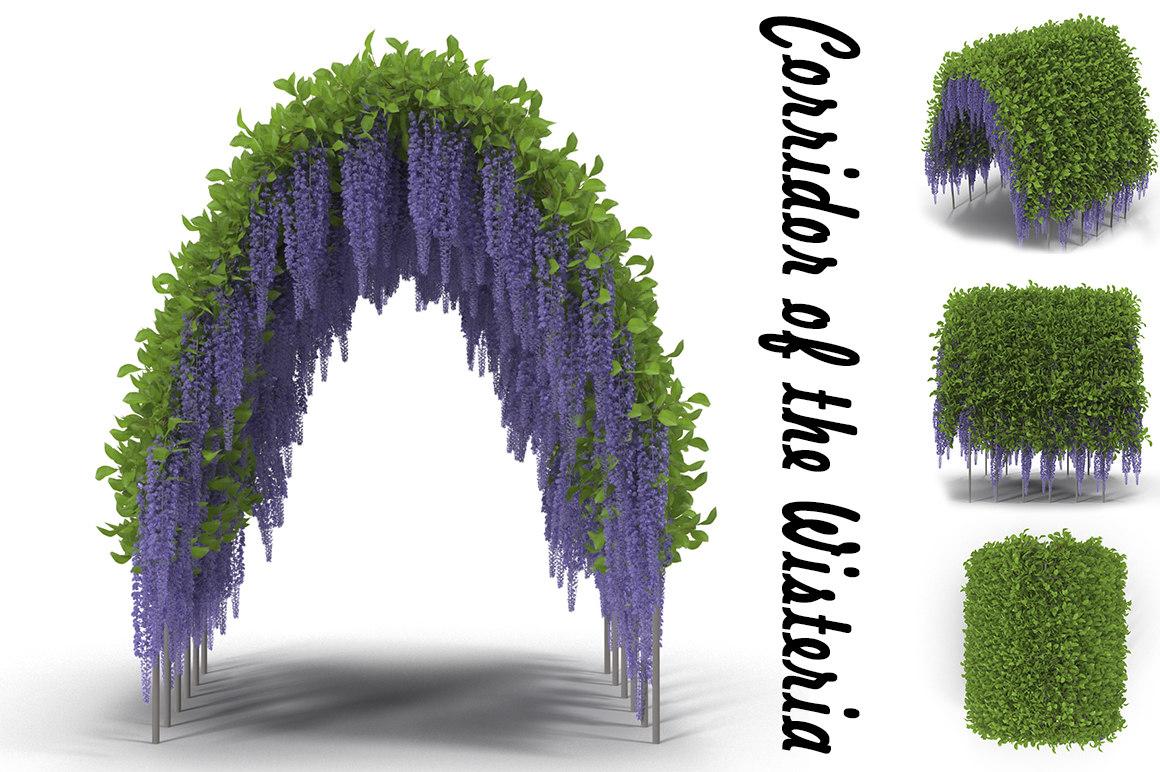 wisteria corridor flowering obj