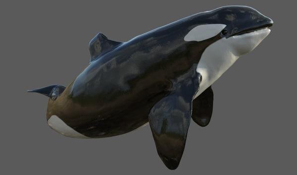 3d obj rigged killer whale