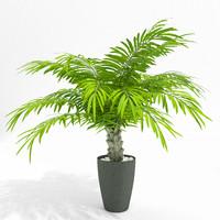 max palm pot