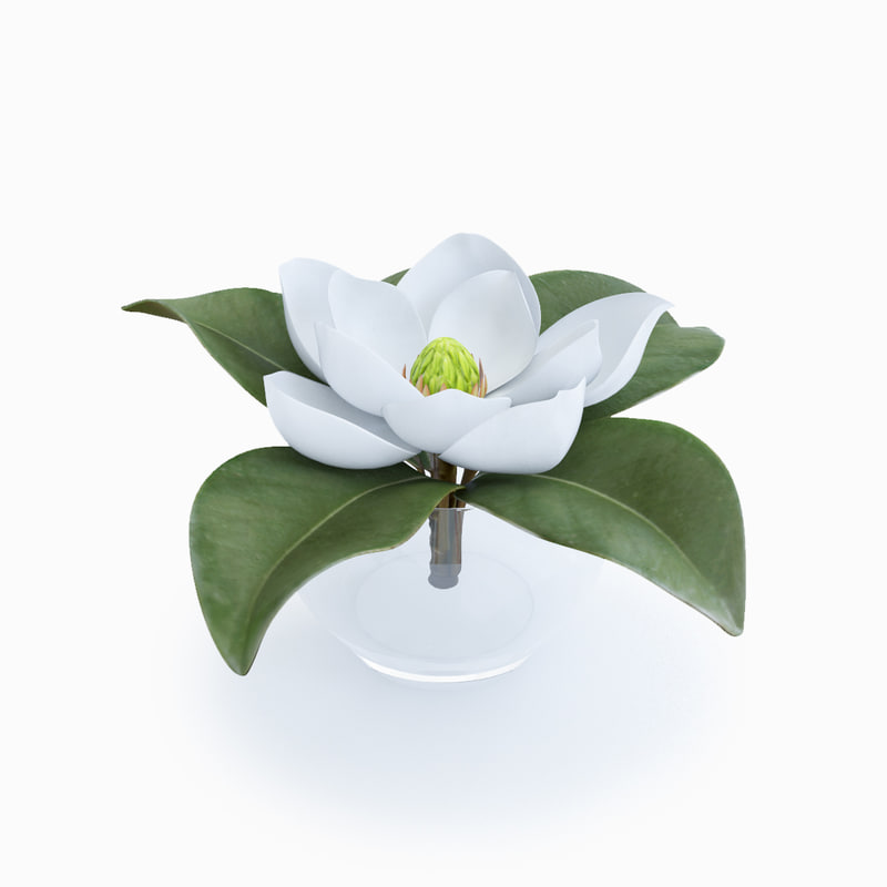 magnolia decorative interior max