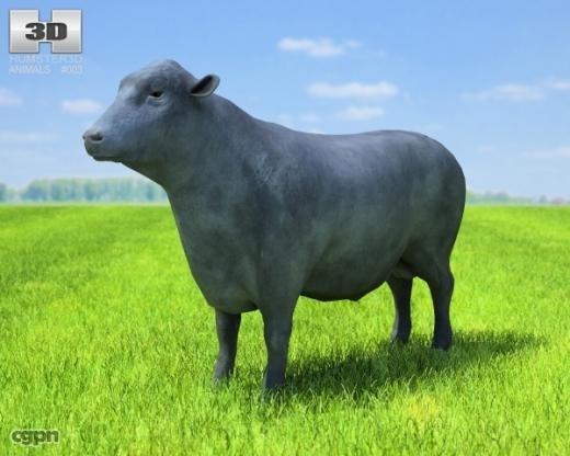 3d bull angus model