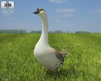goose chinese max