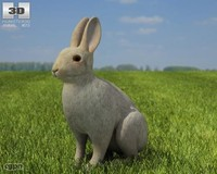 3d model rabbit common
