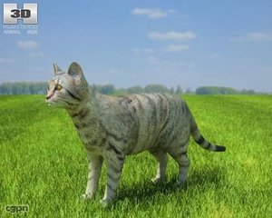 cat domestic 3d model
