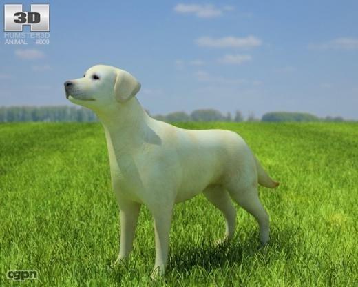 3d dog domestic labrador model