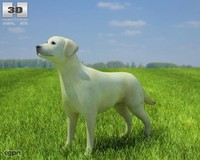 3d dog domestic labrador model